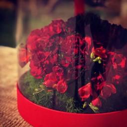 جعبه گل استریا